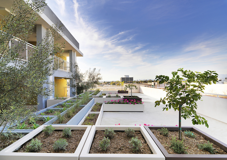 Landscaped roof terrace at Downey View apartment complex