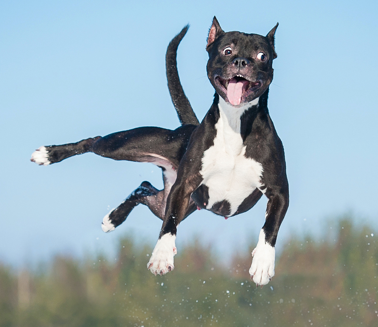 crazy dog in mid air