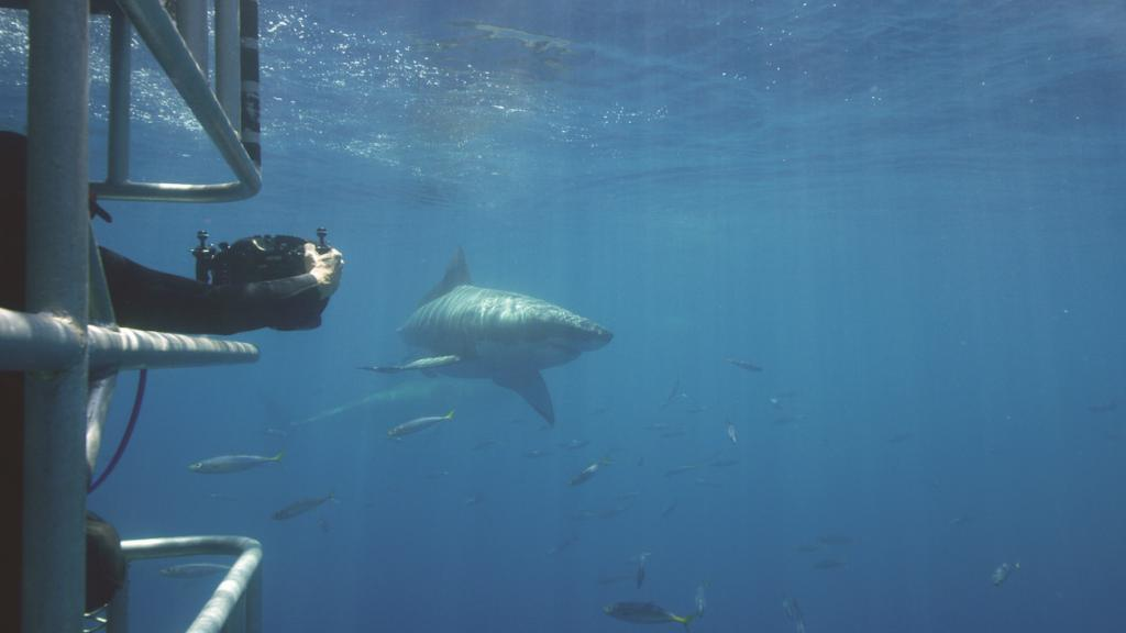 Builders want proof of performance. LP took it to the extreme by sending LP Legacy sub-flooring panels diving with sharks.