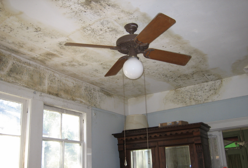 mold on ceiling of home interior