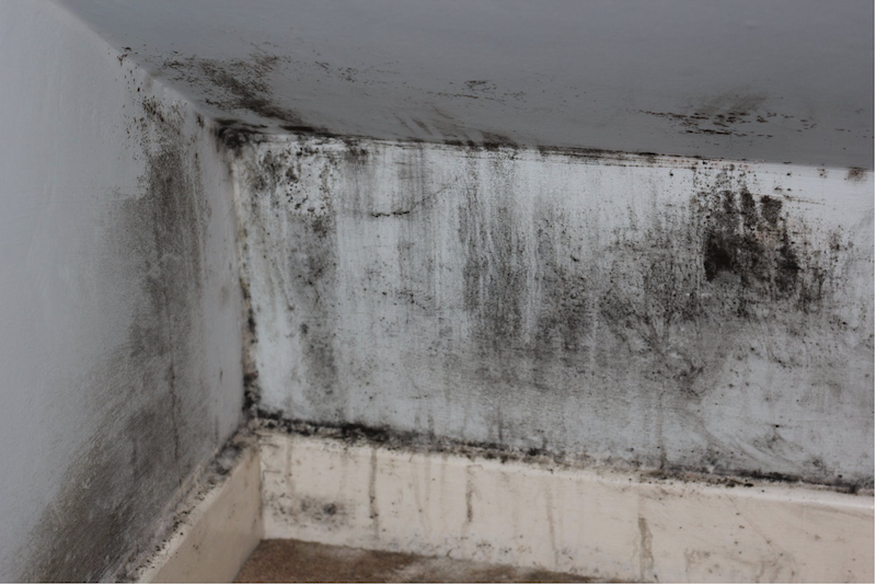 mold growing on home interior wall due to moisture