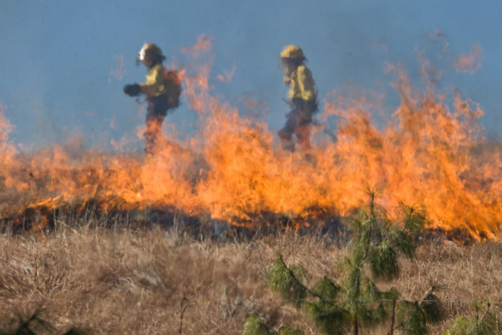 Natural disaster: wildfires