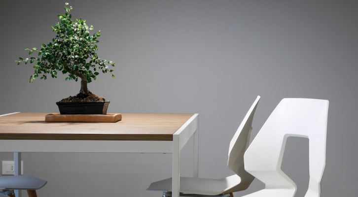 Bonsai tree on table_bringing natural elements indoors_Pixabay