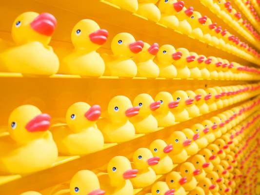 Rubber duckies on a wall