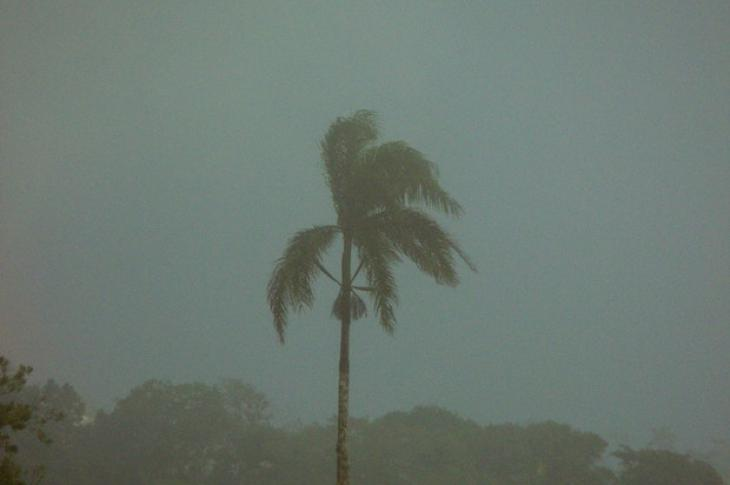Palm-tree_in_a_ storm_Puerto Rico_resilient power grid