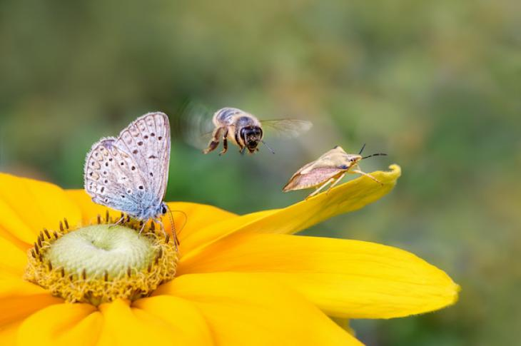 bee, stinkbug, and butterfly landing on yellow flower petals