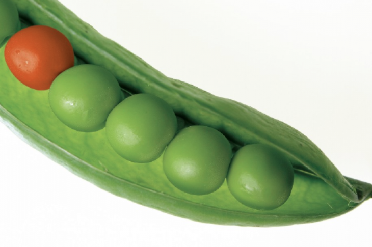 differentiate_stand out from the competition_builders that stand out_peas in a pod_one different