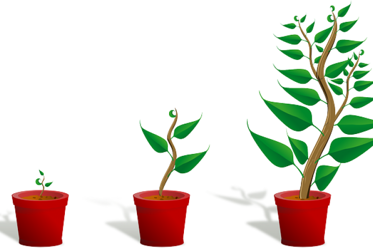 Graphic_image_of_three_potted_plants