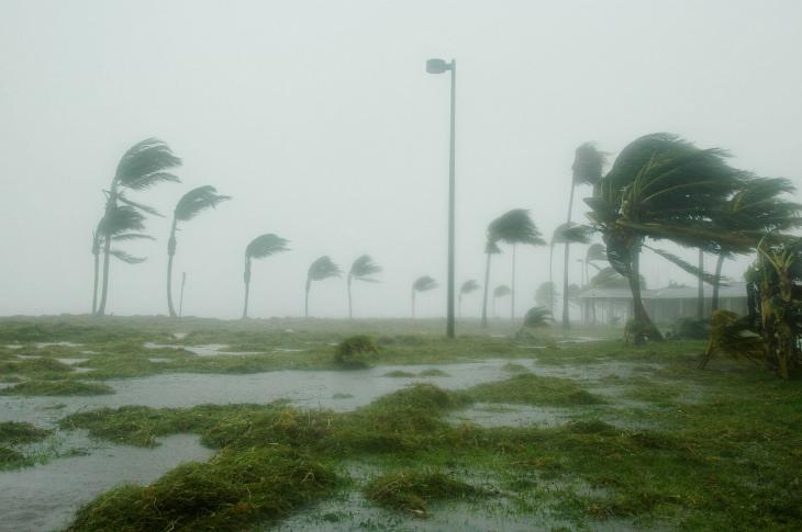 Hurricane, palm trees