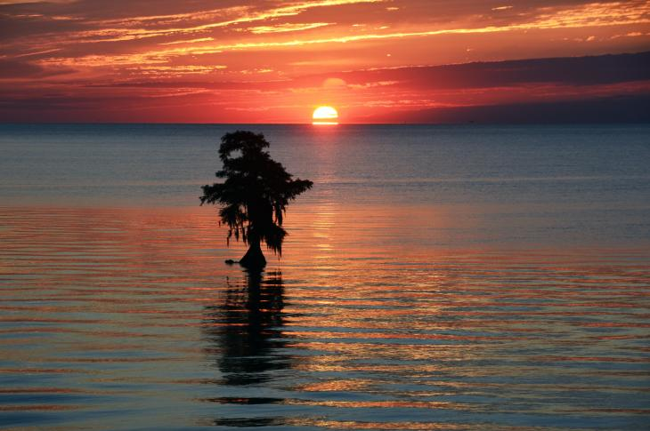 Sunset over water with tree