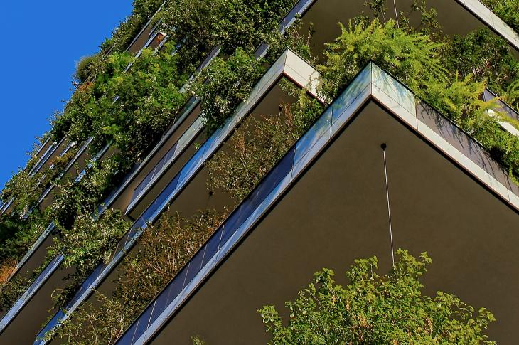 Greenery in a building exterior