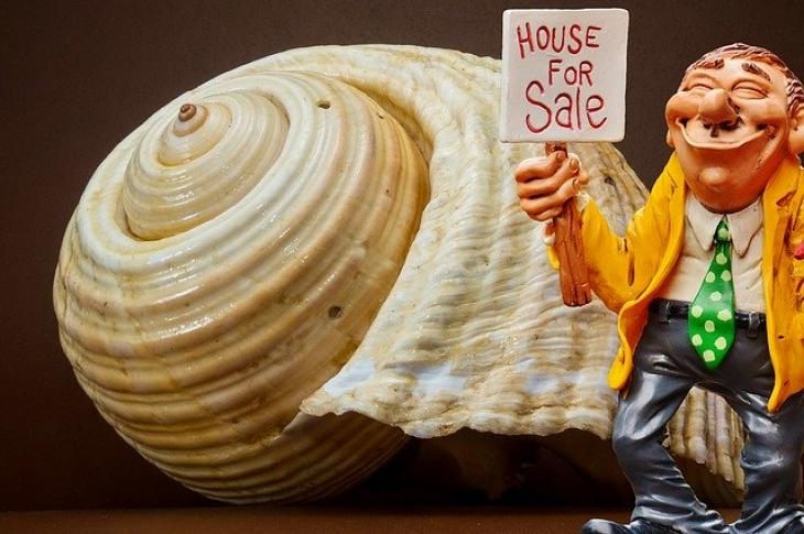 Snail for Sale Home