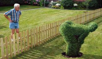 Man looking over fence at cheeky (offensive?) topiary