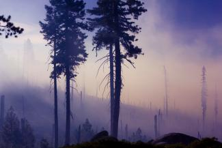 Dawn after wildfire in a forest