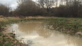 mud puddle with water and surrounding trees is no longer subject to WOTUS regulations