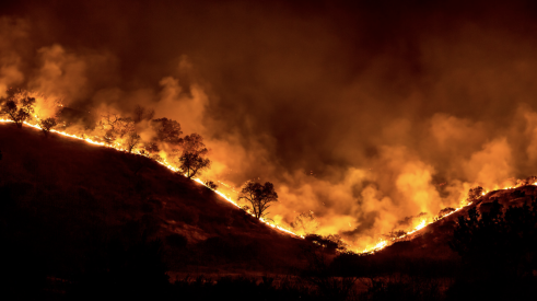 Trees aflame during the Woolsey Fire in California
