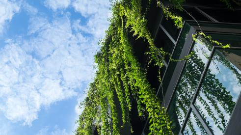 Building with hanging greenery