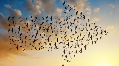 Flock of migrating birds forming an arrow