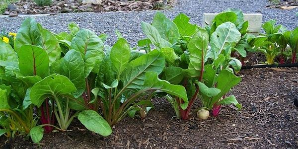 Missouri town's ordinance forces family to remove vegetable garden
