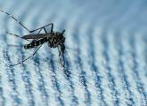 OSHA issues advisory to protect workers from Zika virus